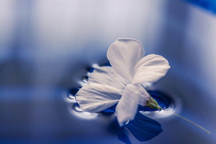 flowers-1167669_1920_1500x